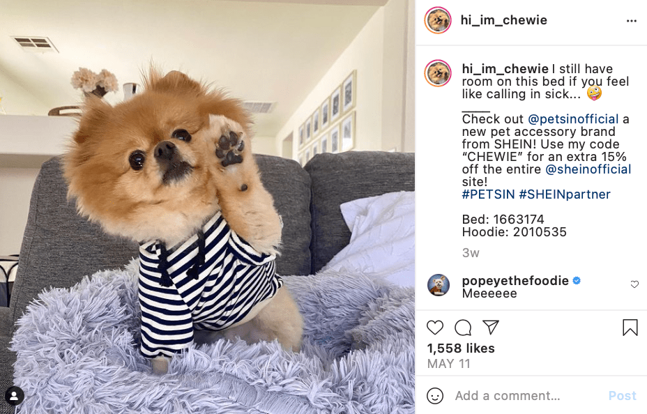 cutest dogs on instagram